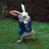 bunnywarren